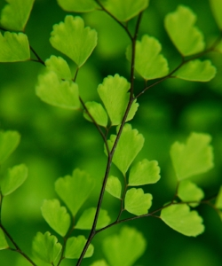 Nature-Green-Leaves-HD-Wallpaper.jpg