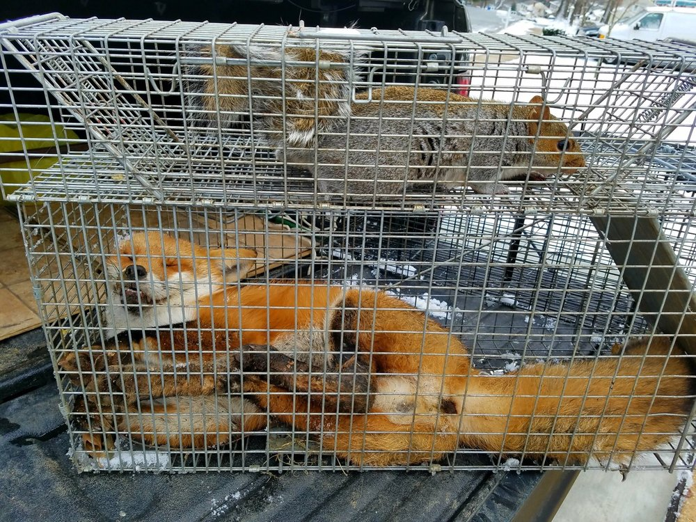 fox:sqr.jpg