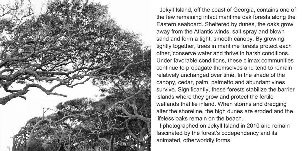 Driftwood Beach #1