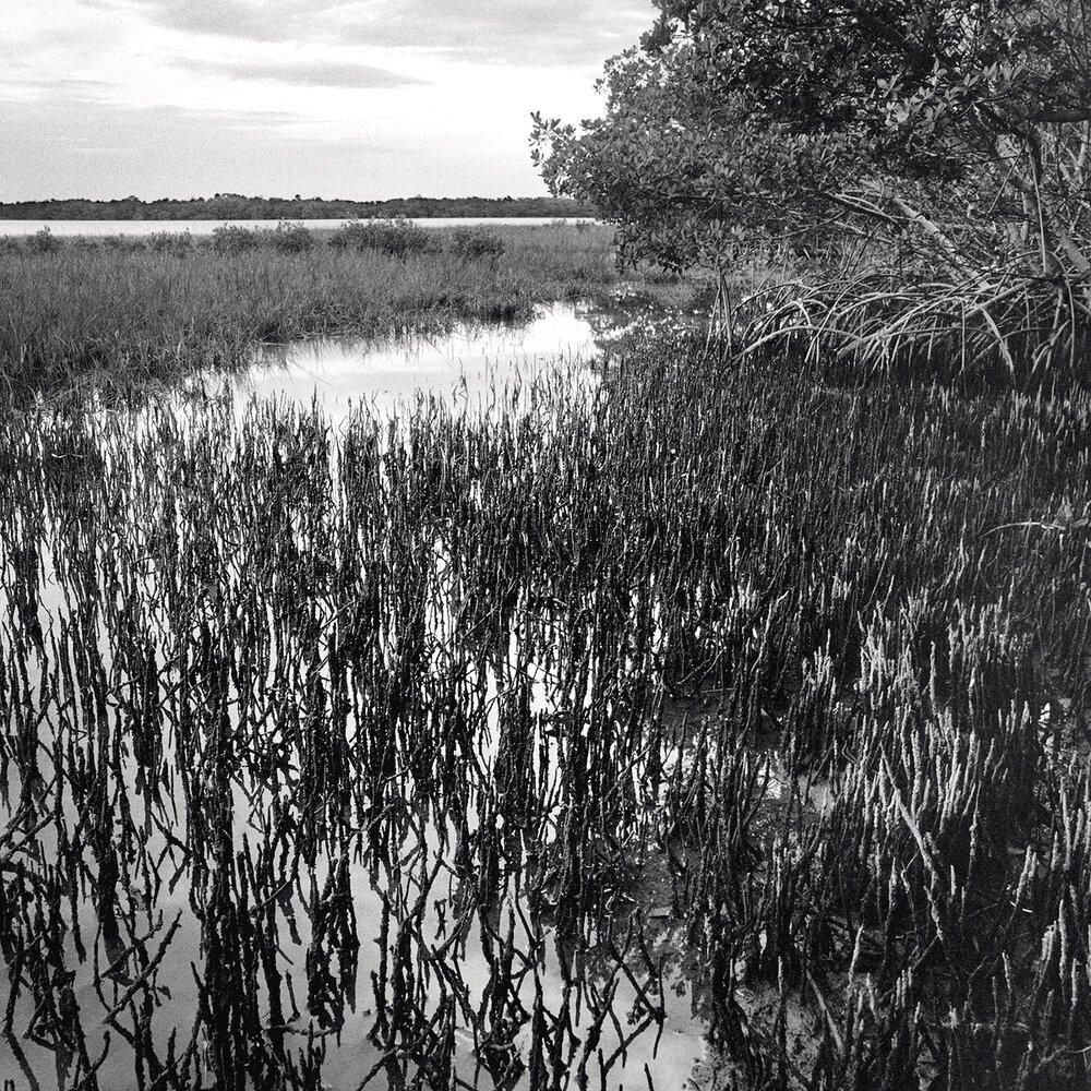 Shoreline, Moonshine Island