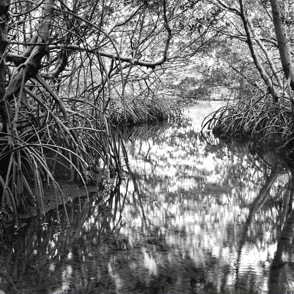 Tidal Creek, Weedon Island