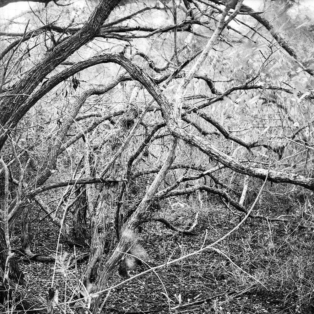 Mangroves, Bonne Fortune Key