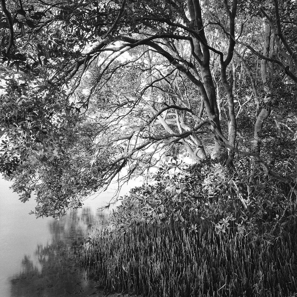 Black Mangroves & Shore, Mullet Key