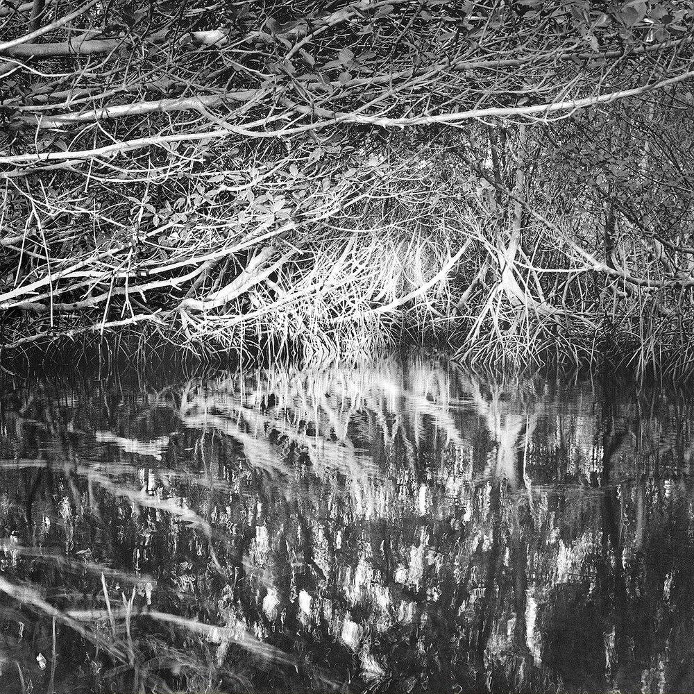 Mangrove Canopy & Setting Sun, Part Key