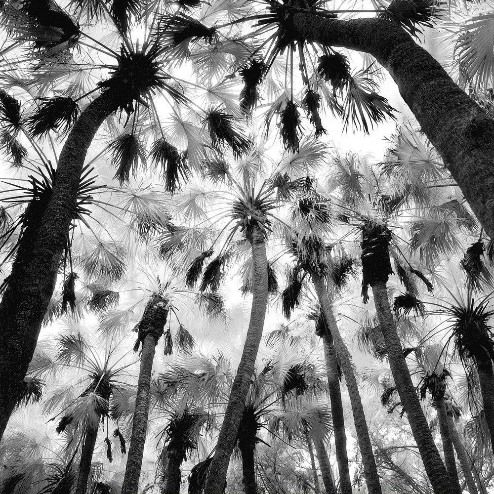 Palm Hammock, Titusville