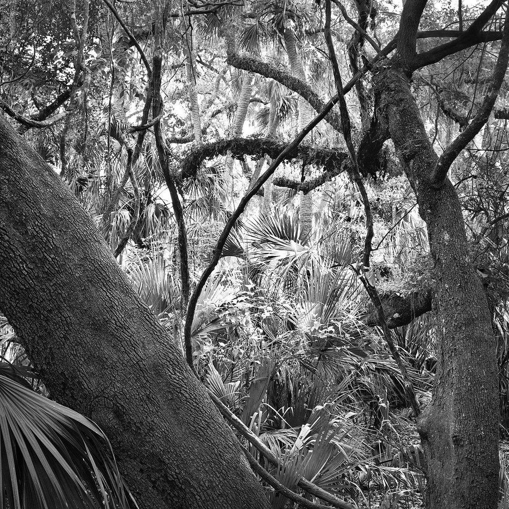 Oaks & Palms, Disney Wilderness Preserve