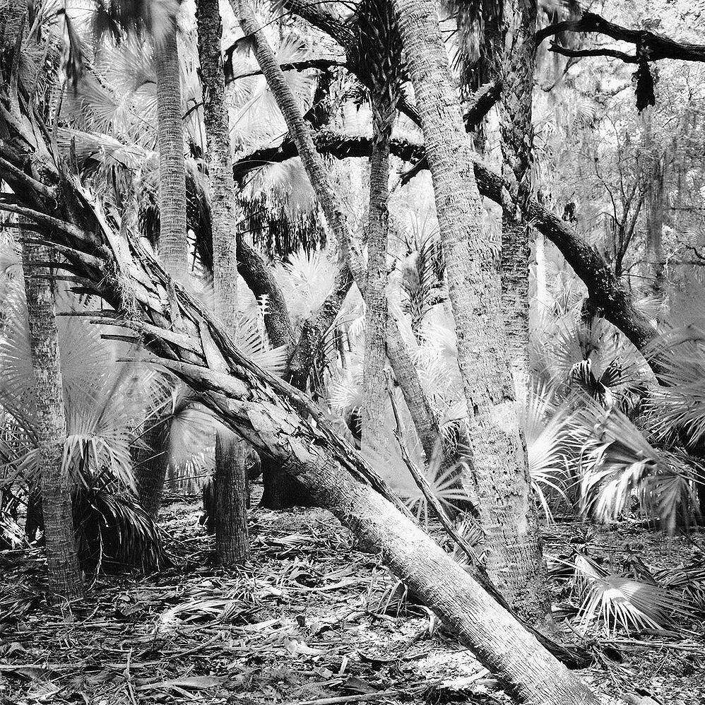 Forest, Myakka River State Park