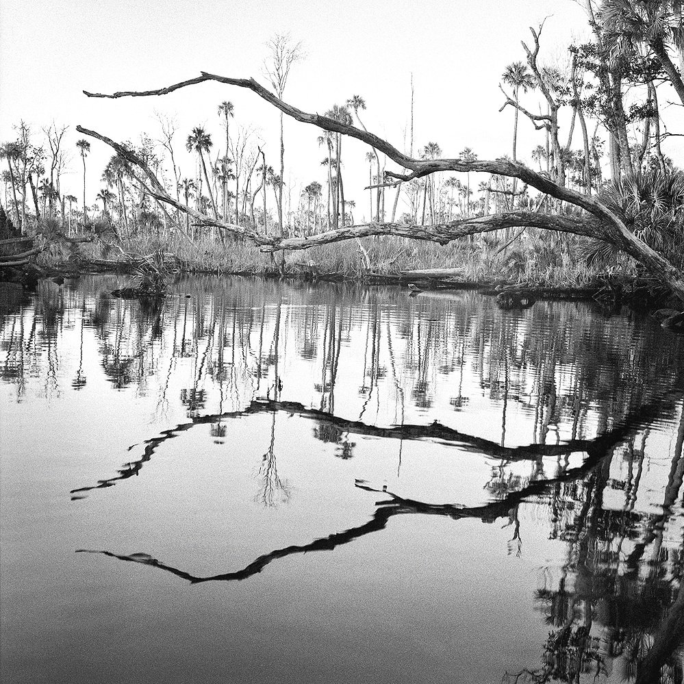 Creek Bend and Dead Trees