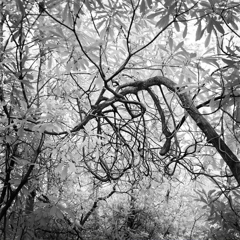 Craggy Gardens Trail #4