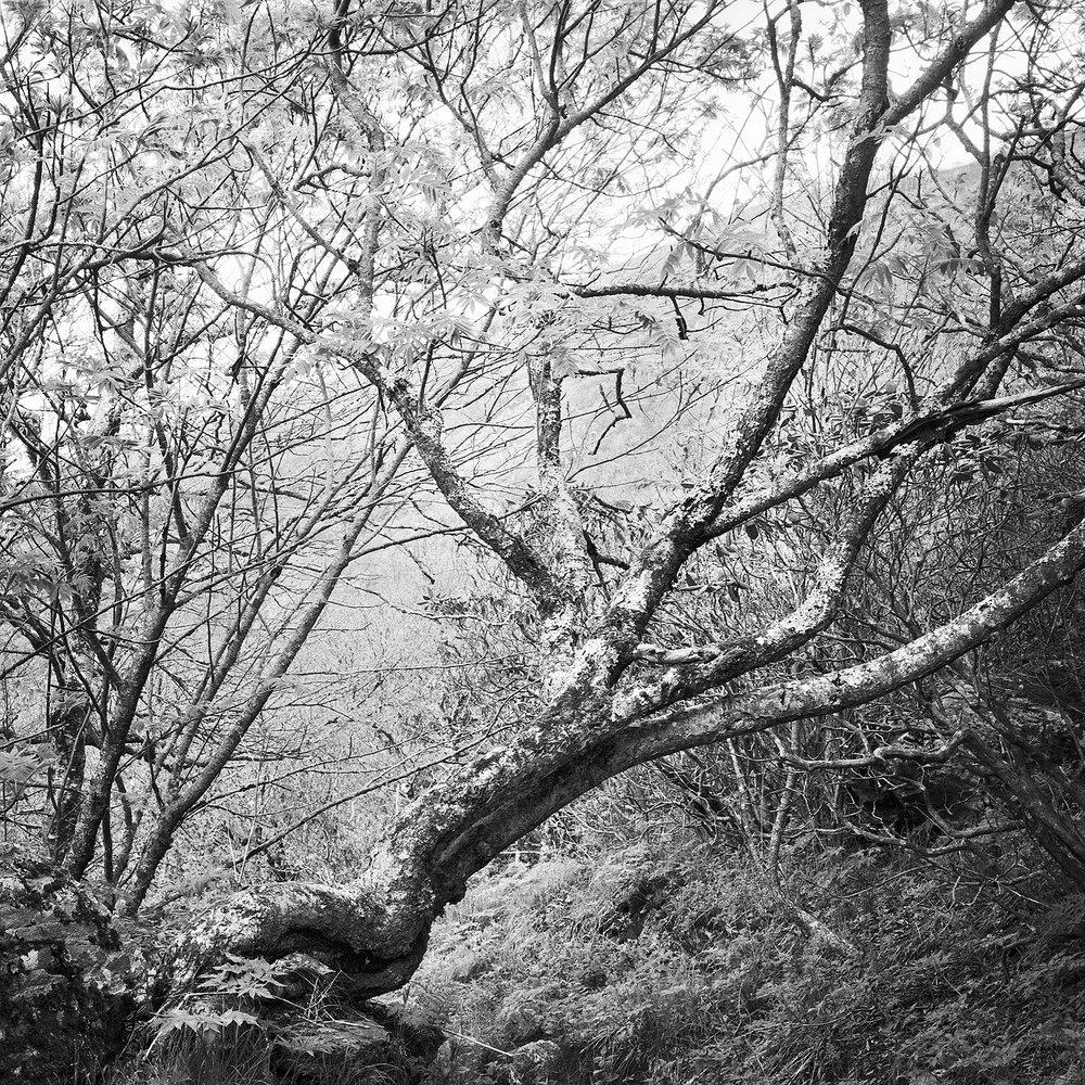 Craggy Bald Trail #12