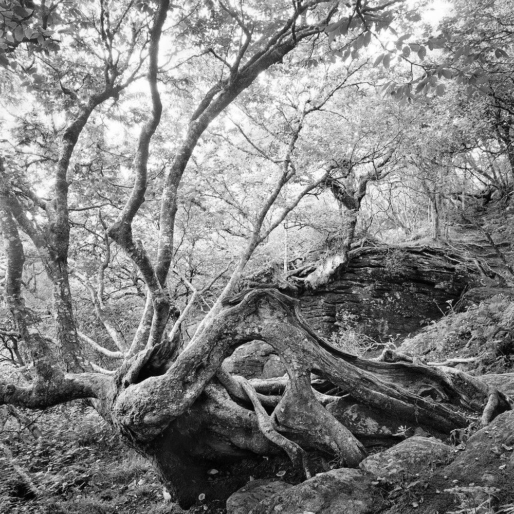 Craggy Pinnacle Trail #8