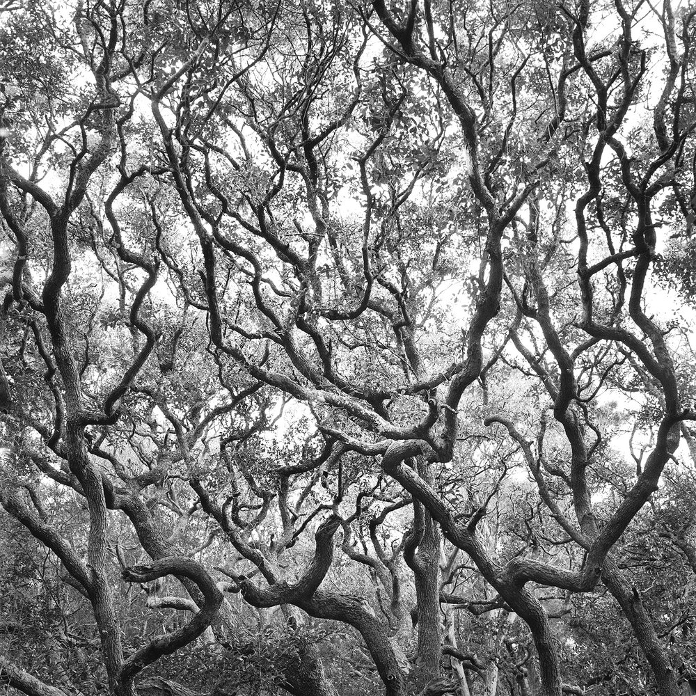 Maritime Forest #10