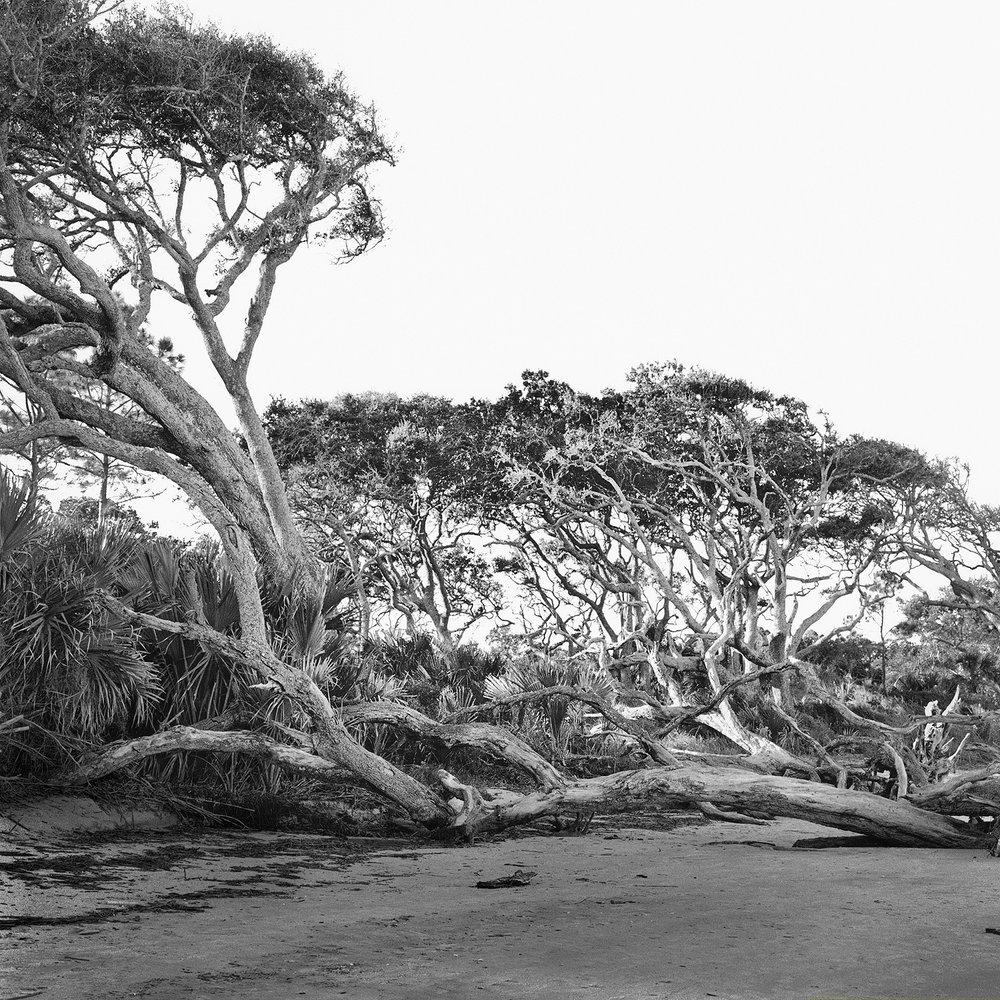 Driftwood Beach #2
