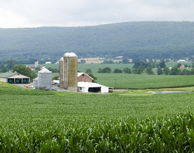 Farm.jpeg