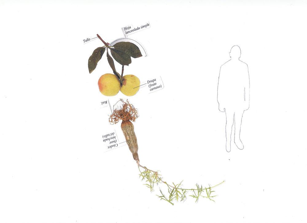 Botánica anatómica 2.jpg