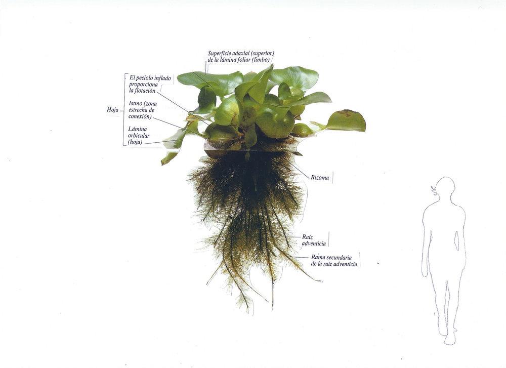 Botánica anatómica 1.jpg