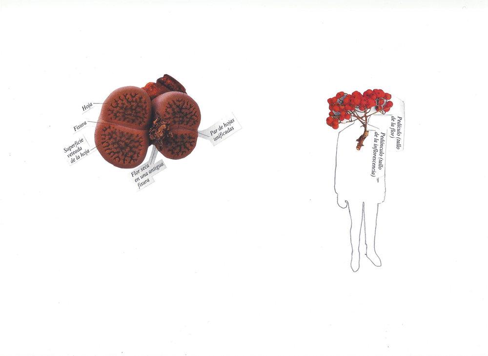 Botánica anatómica 4.jpg