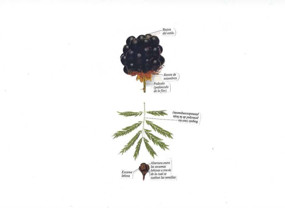 Botánica anatómica 5.jpg