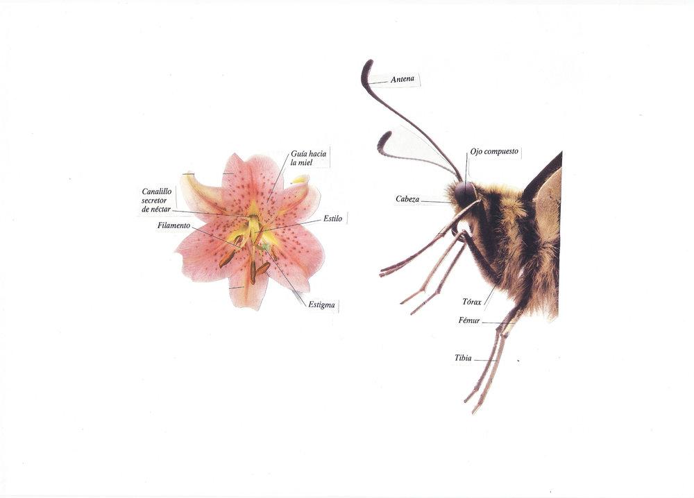 Botánica anatómica 8.jpg