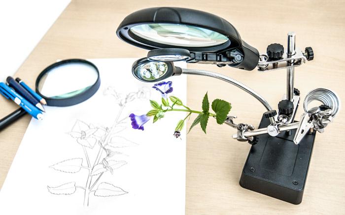 diario-de-estudos-botanicos-Lu-Mori-2.jpg