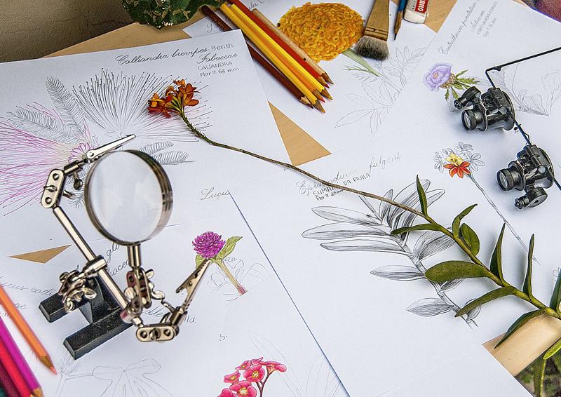 diario-de-estudos-botanicos-Lu-Mori.jpg