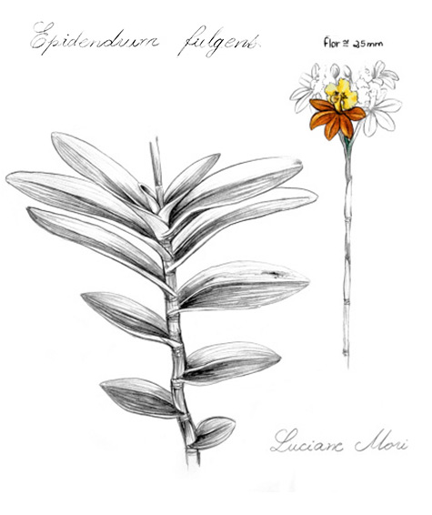 001-Diario-de-estudos-botanicos-abstracao-Lu-Mori-.jpg
