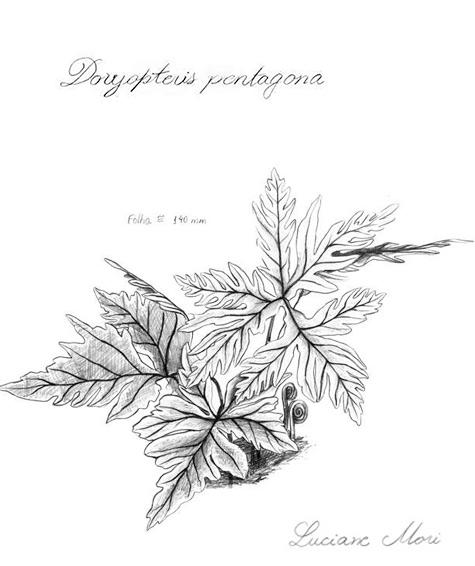 002-Diario-de-estudos-botanicos-Lu-Mori-.jpg