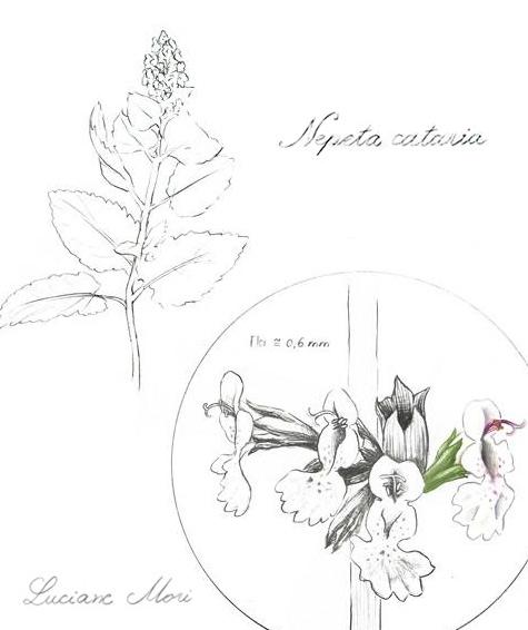 003-Diario-de-estudos-botanicos-Lu-Mori-.jpg