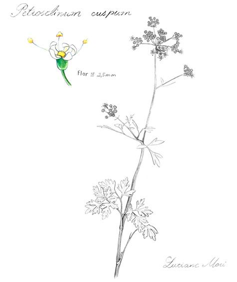 004-Diario-de-estudos-botanicos-Lu-Mori-.jpg