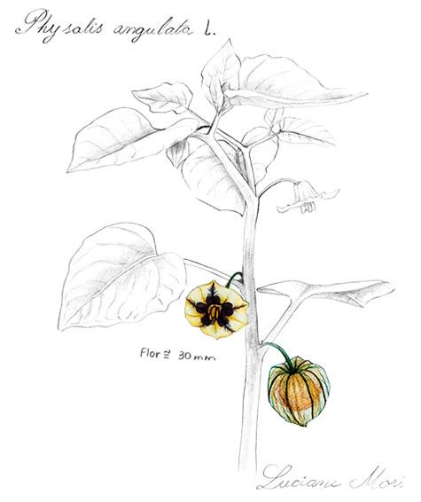 005-Diario-de-estudos-botanicos-Lu-Mori-.jpg