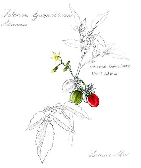 006-Diario-de-estudos-botanicos-Lu-Mori-.jpg