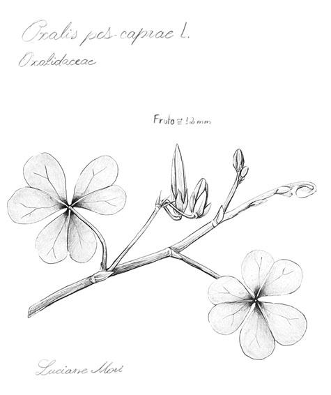007-Diario-de-estudos-botanicos-Lu-Mori-.jpg