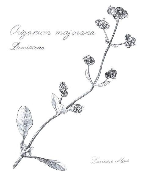 008-Diario-de-estudos-botanicos-Lu-Mori-.jpg