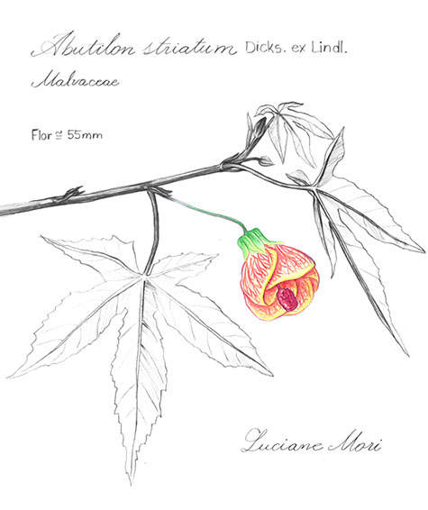 009-Diario-de-estudos-botanicos-Lu-Mori-.jpg