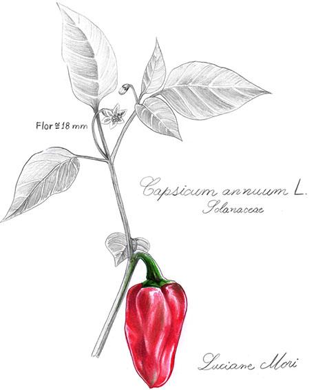 010-Diario-de-estudos-botanicos-Lu-Mori-.jpg