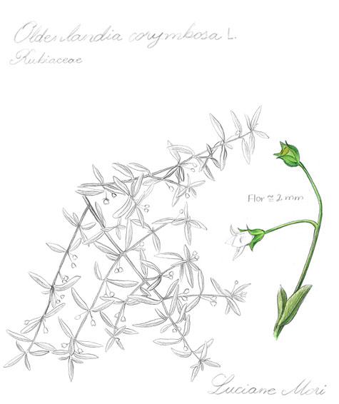 012-Diario-de-estudos-botanicos-Lu-Mori-.jpg