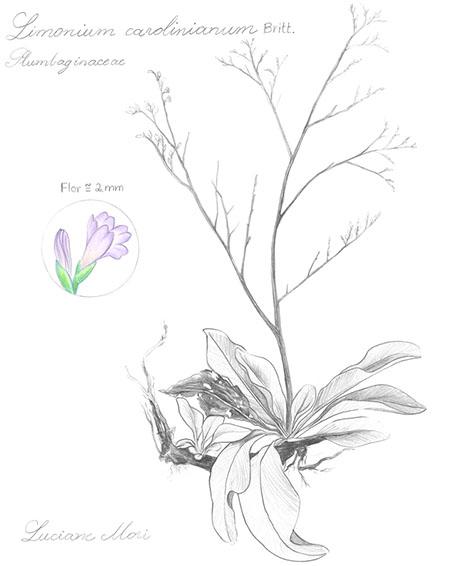 013-Diario-de-estudos-botanicos-Lu-Mori-.jpg