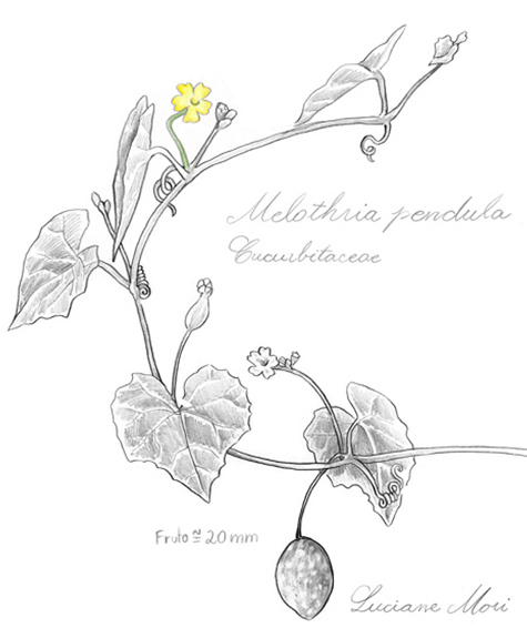 014-Diario-de-estudos-botanicos-Lu-Mori-.jpg