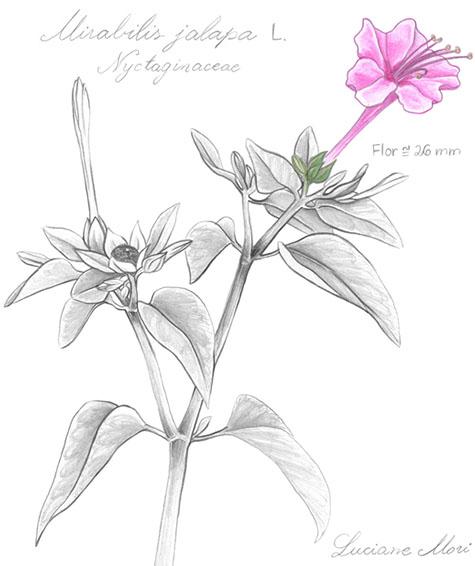 015-Diario-de-estudos-botanicos-Lu-Mori-.jpg