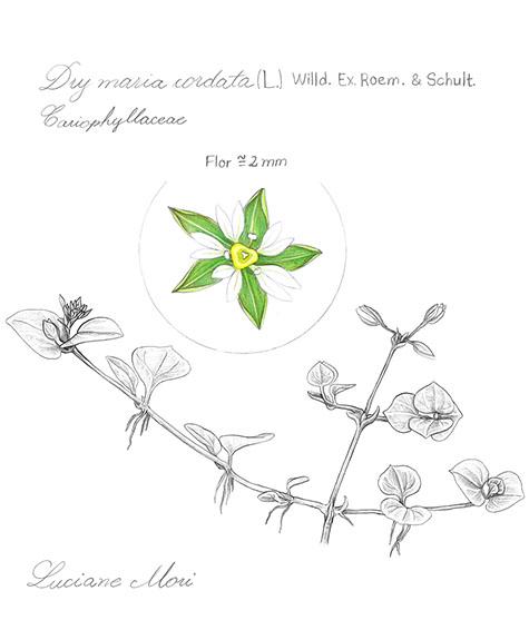 017-Diario-de-estudos-botanicos-Lu-Mori-.jpg