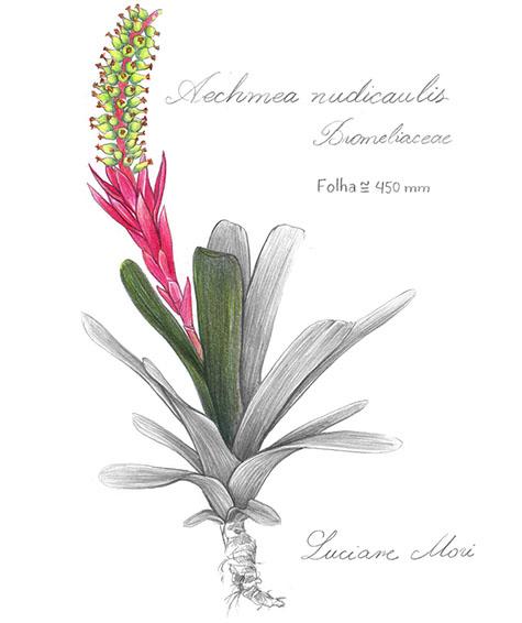 018-Diario-de-estudos-botanicos-Lu-Mori-.jpg