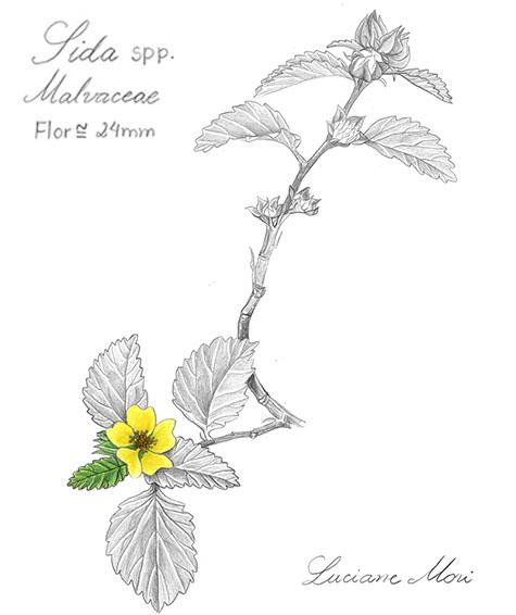 019-Diario-de-estudos-botanicos-Lu-Mori-.jpg