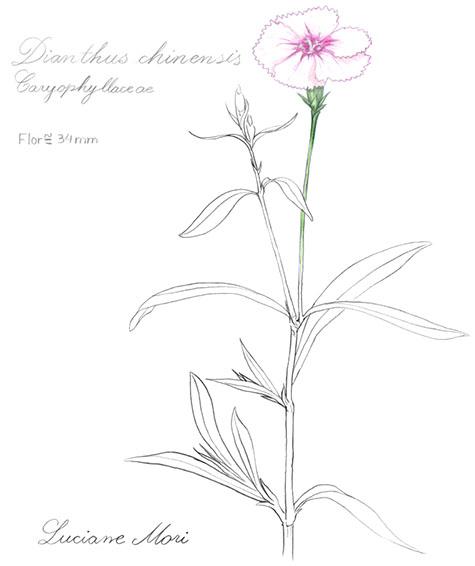 020-Diario-de-estudos-botanicos-Lu-Mori-.jpg