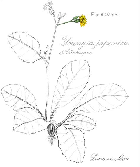 021-Diario-de-estudos-botanicos-Lu-Mori-.jpg