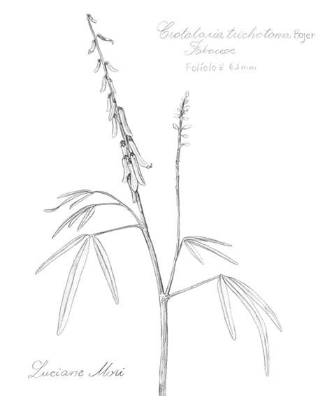 022-Diario-de-estudos-botanicos-Lu-Mori-.jpg