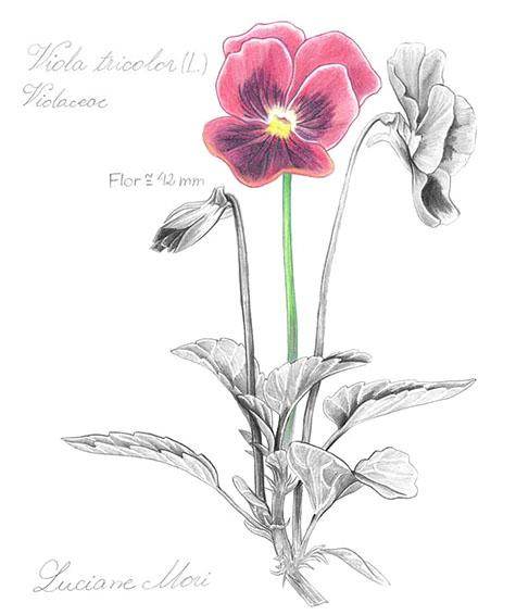 023-Diario-de-estudos-botanicos-Lu-Mori-.jpg