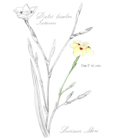 024-Diario-de-estudos-botanicos-Lu-Mori-.jpg