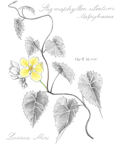 025-Diario-de-estudos-botanicos-Lu-Mori-.jpg