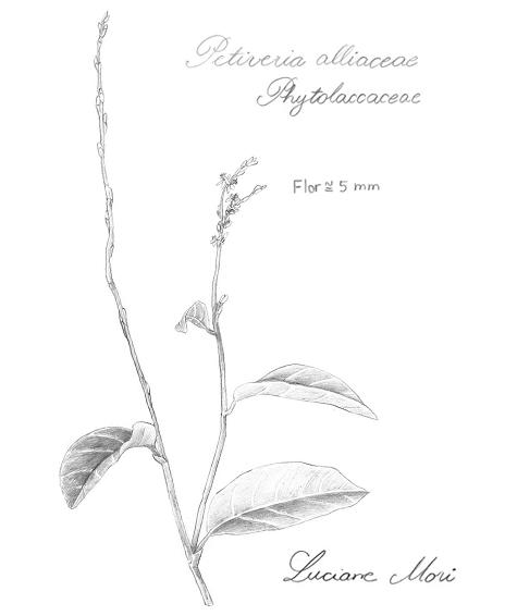 027-Diario-de-estudos-botanicos-Lu-Mori-.jpg
