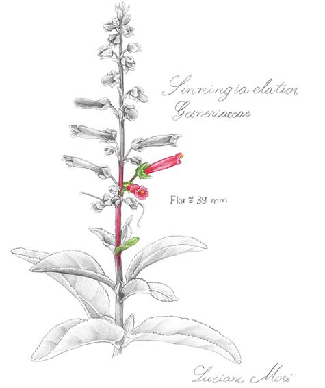 026-Diario-de-estudos-botanicos-Lu-Mori-.jpg
